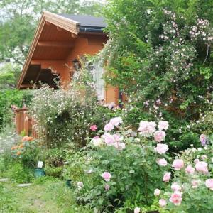 今日も庭の風景とルリカさんに聞くと