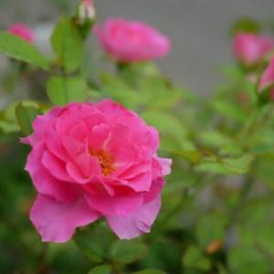 今日の庭写真と、いろいろな存在に聞いてみた話と。