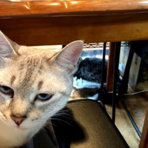 今日の猫とご質問にお答えしてと