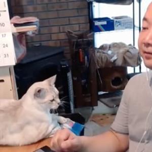 今日のオンラインワークショップと猫写真とか