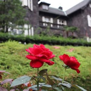 またまた旧古河庭園のバラ