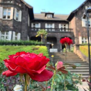 洋館とバラ、駒込の旧古河庭園へ