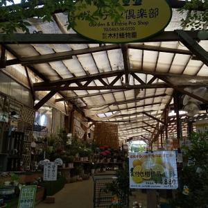 平塚・景色のいい土屋エリア、木村植物園ガーデン倶楽部のカフェ♪