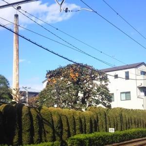 今年最後の小春日和かも知れない。