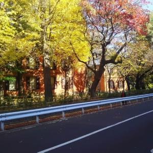 東京藝術大学音楽学部の黄葉/2019年