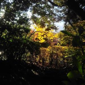 行船公園の夕陽