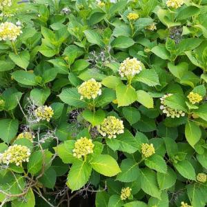初夏の植物と風味