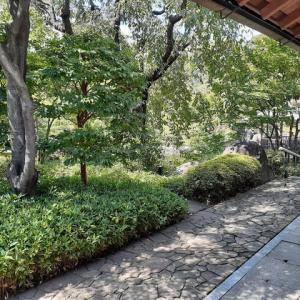 目白庭園を回遊する。