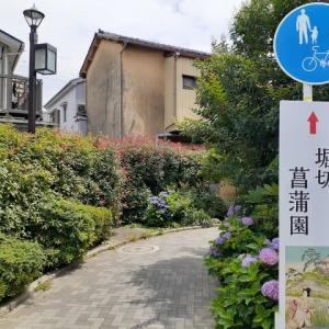 「堀切菖蒲園」へ行く道は紫陽花の小路