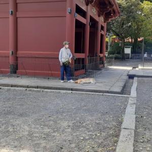 根津神社楼門の犬/2021年10月
