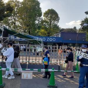 パンダ人気の上野動物園