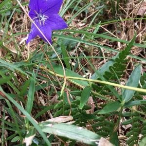 秋の風情 秋は紫色と共にやって来る