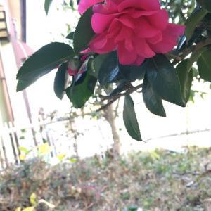 今、庭で咲いている花