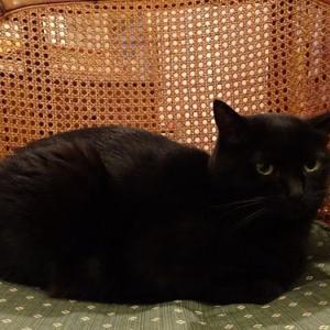 第5回目の黒猫展、盛況のうちにその幕を閉じることができました。ありがとうございました!