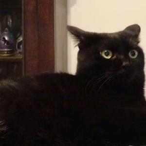 ウチの黒猫ノワールから「お・も・て・な・し」の心で残暑お見舞い申し上げます