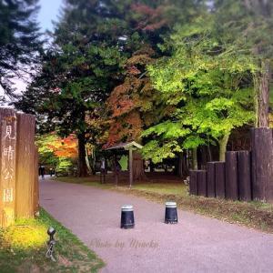 【函館】紅葉が見ごろの函館、ライットアップも美しい見晴公園(香雪園)