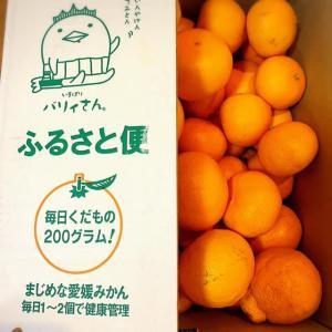 まじめな愛媛のみかんです💖柑橘の最高峰『せとか』と『デコポン』でビタミンC摂取