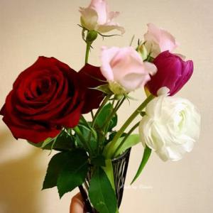【日比谷花壇】ハナノヒお花の定額アプリを購入しました。