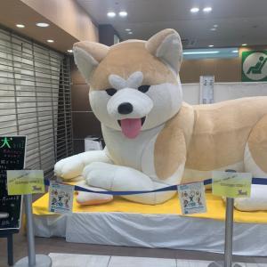 【八王子】JR八王子駅に出張中の秋田県ならぬ秋田犬