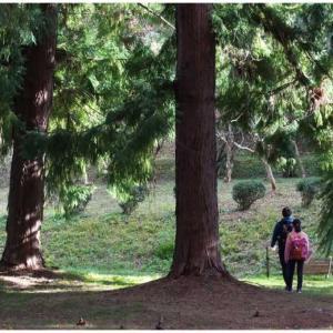 青い森 赤い森