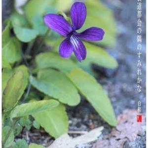 舗道の隅も春/すみれ