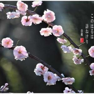 花飾り/紅梅