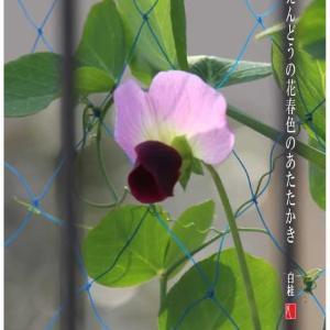 春色/えんどうの花