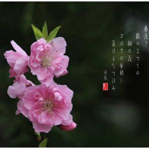 雛のまつり/ももの花