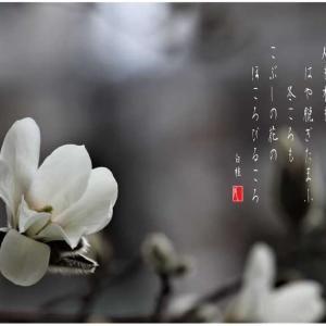 こぶしの花の咲くころ