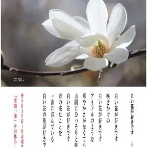 白い花のこと