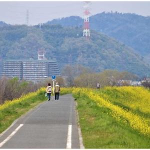 春色/淀の堤