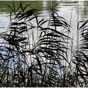 秋の午後/水面