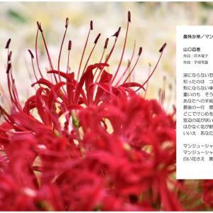 曼殊沙華/まんじゅしゃか 山口百恵の歌