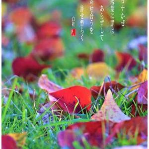 落葉とコロナ風邪