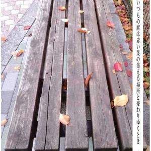 落葉のためのベンチ