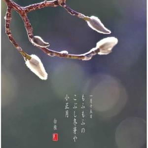 小正月/こぶし冬芽