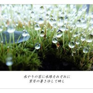 葉月/水珠