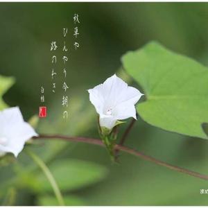 秋草/まめ朝顔