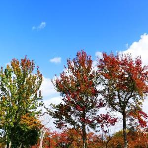 米子湊山公園(錦パーク)の紅葉