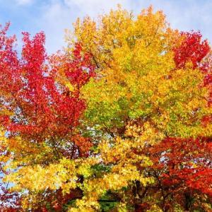 湊山公園(米子市)の紅葉 2019年10月22日撮影分
