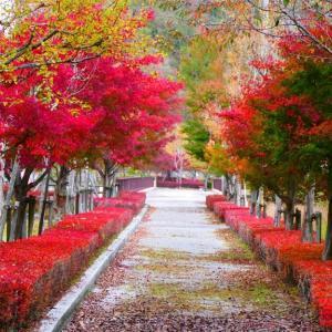 日南町の紅葉  11月7日撮影分