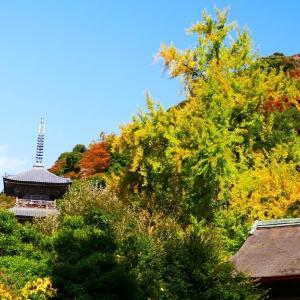 島根県安来市の紅葉