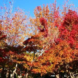湊山公園の紅葉 11月12日撮影分