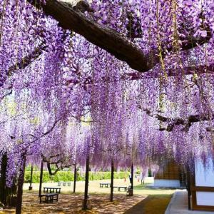 米子市内の今日のお花たち♪