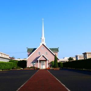 米子教会のアンネの薔薇が咲き始めた 動画あり