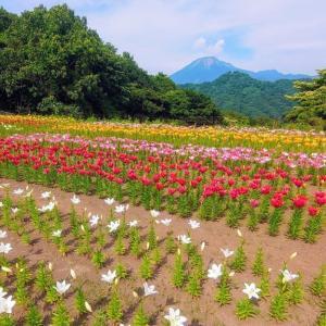 とっとり花回廊のゆり 秘密の花園