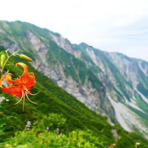 大山ユートピアお花畑 リベンジ