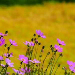秋の花 9月16日撮影分