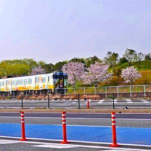 鬼太郎列車とサクラ