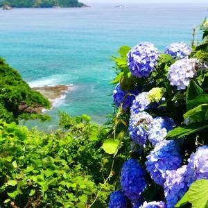 海辺に咲く紫陽花